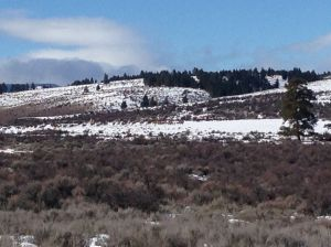 Look really close in the center, one of the 3 herds of elk I saw today