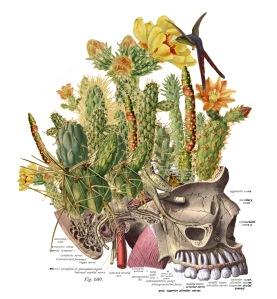 Travis Bedel Anatomical Collage