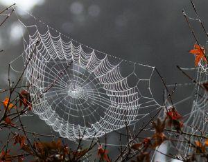 http://www.oregonlive.com/multimedia/index.ssf/2013/10/autumn_dew_brings_spider_webs.html