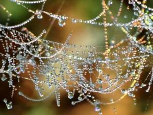 http://pebblepups.blogspot.com/2014/01/rainbow-fragments-on-spider-webs.html