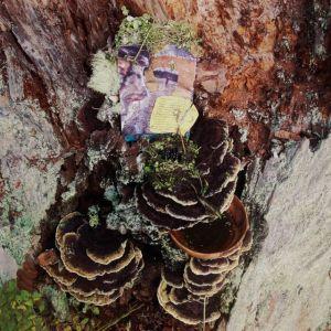 A wonder-fall earth altar